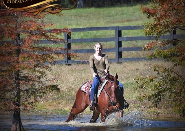 024-Phoenix-Sorrel-AQHA-gelding-for-sale