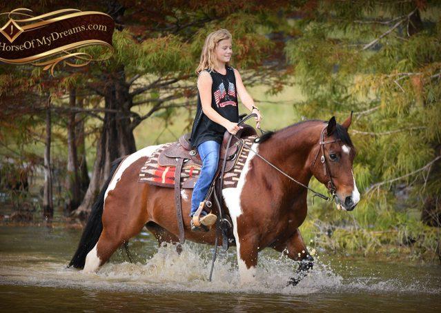 024-Rambo-Bay-Tobiano-APHA-Roping-Heeling-Gelding-Horse-For-Sale