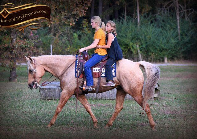 025-Frankie-AQHA=Palomino-Quarter-Horse-Western-Pleasure-for-sale