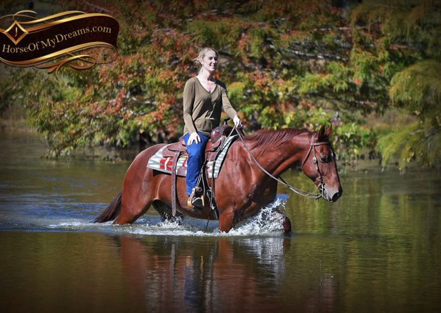 025-Phoenix-Sorrel-AQHA-gelding-for-sale