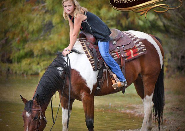 025-Rambo-Bay-Tobiano-APHA-Roping-Heeling-Gelding-Horse-For-Sale
