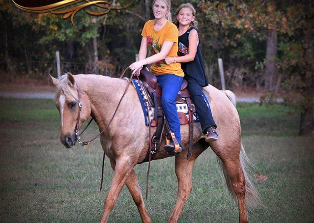 026-Frankie-AQHA=Palomino-Quarter-Horse-Western-Pleasure-for-sale