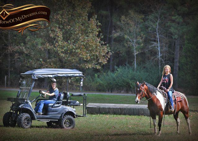 026-Rambo-Bay-Tobiano-APHA-Roping-Heeling-Gelding-Horse-For-Sale