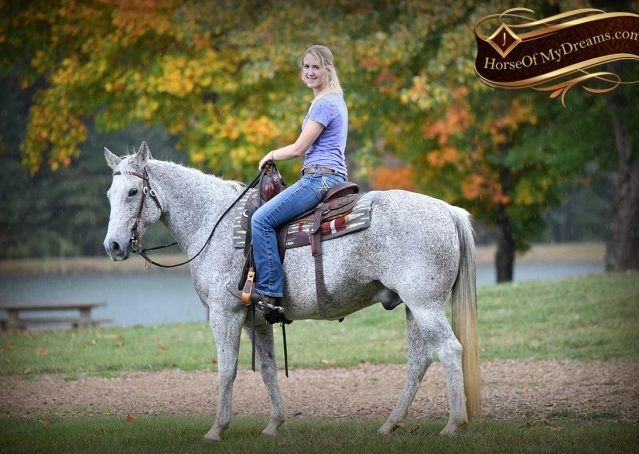 027-Ike-Grey-AQHA-gelding-for-sale