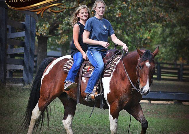 027-Rambo-Bay-Tobiano-APHA-Roping-Heeling-Gelding-Horse-For-Sale