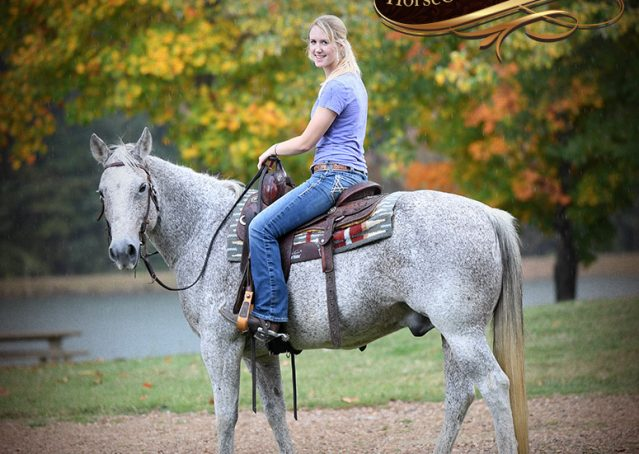 028-Ike-Grey-AQHA-gelding-for-sale