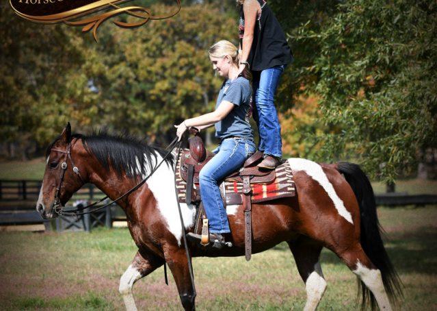028-Rambo-Bay-Tobiano-APHA-Roping-Heeling-Gelding-Horse-For-Sale