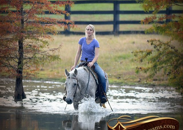 029-Ike-Grey-AQHA-gelding-for-sale