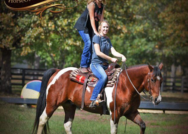 029-Rambo-Bay-Tobiano-APHA-Roping-Heeling-Gelding-Horse-For-Sale