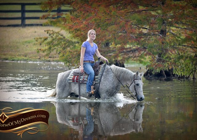 030-Ike-Grey-AQHA-gelding-for-sale