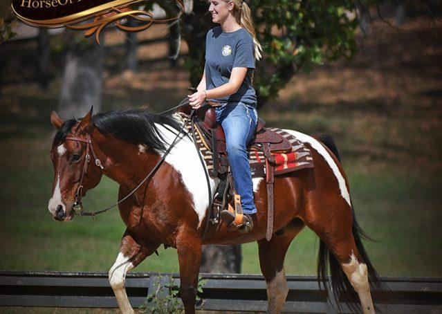030-Rambo-Bay-Tobiano-APHA-Roping-Heeling-Gelding-Horse-For-Sale