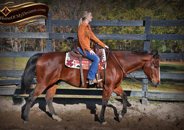 002-Harley-Bay-Quarter-Horse-Gelding-For-Sale