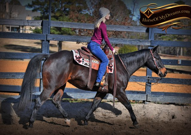 002-Hopper-Bay-AQHA-Gelding-For-Sale