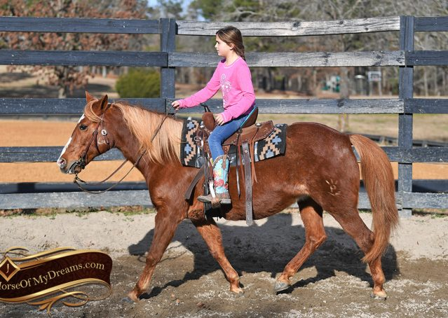 002-Junie-B-Sorrel-Quarter-Pony-Mare-For-Sale