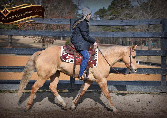 002-Sundance-AQHA-NRHA-Palomino-Quarter-Horse-Reiner-Reining-Horse-For-Sale