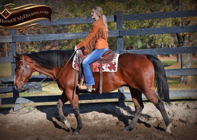 003-Harley-Bay-Quarter-Horse-Gelding-For-Sale