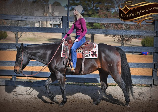 003-Hopper-Bay-AQHA-Gelding-For-Sale