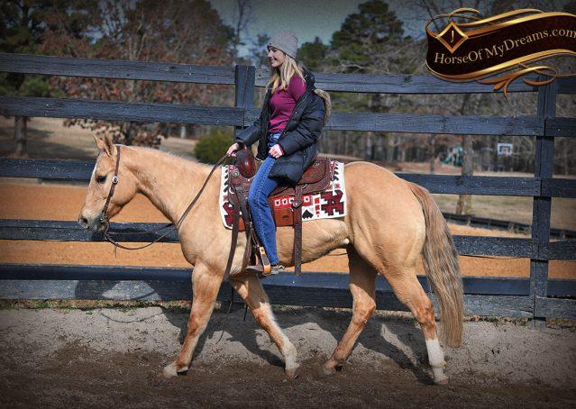 003-Sundance-AQHA-NRHA-Palomino-Quarter-Horse-Reiner-Reining-Horse-For-Sale