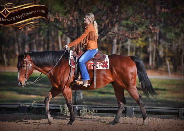 004-Harley-Bay-Quarter-Horse-Gelding-For-Sale