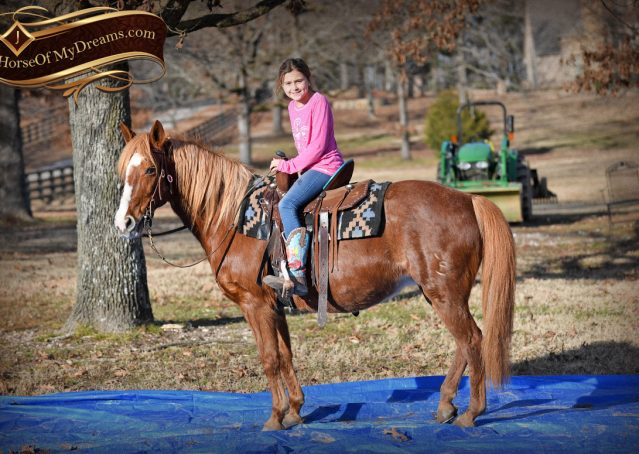004-Junie-B-Sorrel-Quarter-Pony-Mare-For-Sale