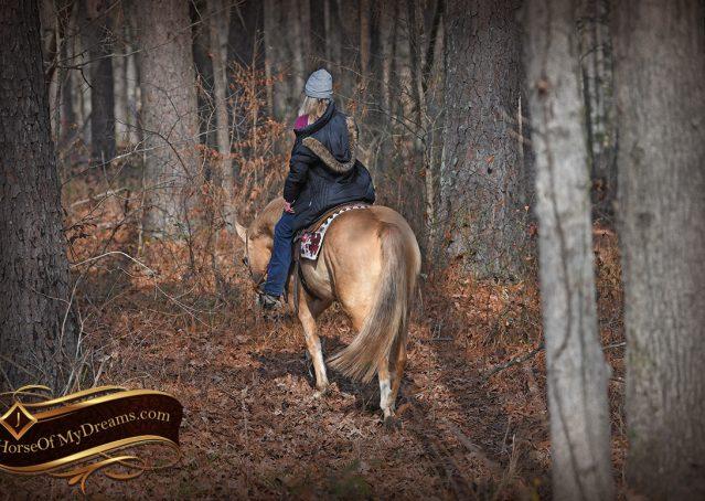 004-Sundance-AQHA-NRHA-Palomino-Quarter-Horse-Reiner-Reining-Horse-For-Sale
