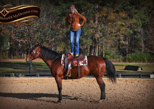 005-Harley-Bay-Quarter-Horse-Gelding-For-Sale