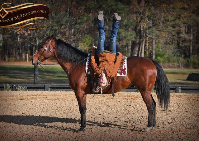 006-Harley-Bay-Quarter-Horse-Gelding-For-Sale