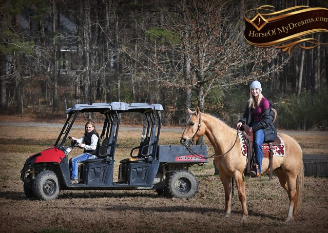 006-Sundance-AQHA-NRHA-Palomino-Quarter-Horse-Reiner-Reining-Horse-For-Sale