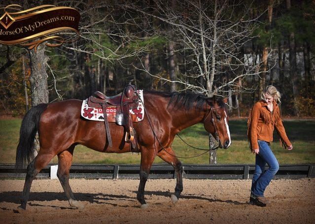 007-Harley-Bay-Quarter-Horse-Gelding-For-Sale