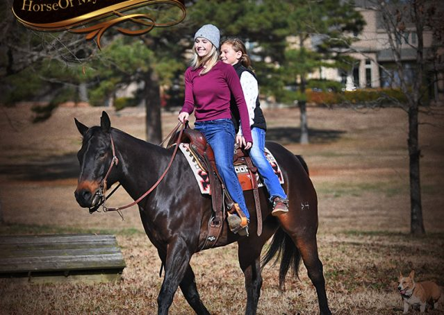 007-Hopper-Bay-AQHA-Gelding-For-Sale