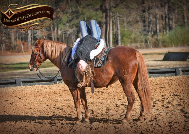 007-Junie-B-Sorrel-Quarter-Pony-Mare-For-Sale
