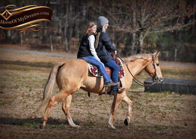 007-Sundance-AQHA-NRHA-Palomino-Quarter-Horse-Reiner-Reining-Horse-For-Sale