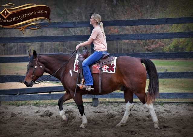 008-Carson=Bay-tobiano-gelding-for-sale