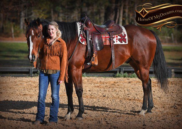 008-Harley-Bay-Quarter-Horse-Gelding-For-Sale