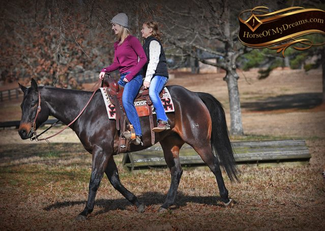 008-Hopper-Bay-AQHA-Gelding-For-Sale