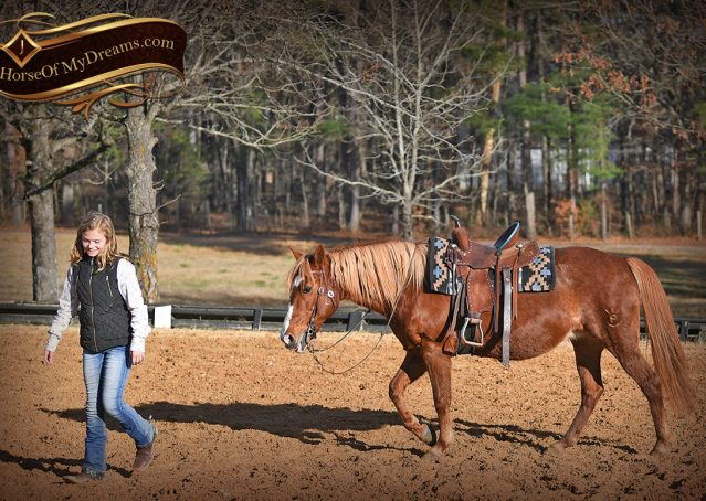 008-Junie-B-Sorrel-Quarter-Pony-Mare-For-Sale