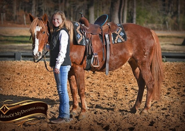 009-Junie-B-Sorrel-Quarter-Pony-Mare-For-Sale
