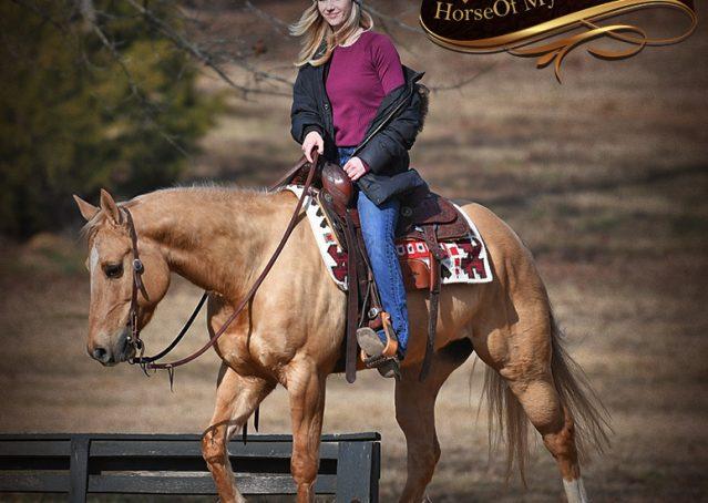 009-Sundance-AQHA-NRHA-Palomino-Quarter-Horse-Reiner-Reining-Horse-For-Sale