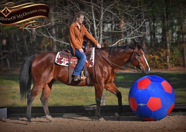 010-Harley-Bay-Quarter-Horse-Gelding-For-Sale