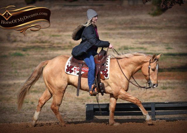 010-Sundance-AQHA-NRHA-Palomino-Quarter-Horse-Reiner-Reining-Horse-For-Sale