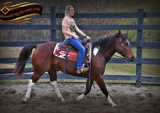 011-Carson=Bay-tobiano-gelding-for-sale