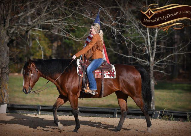 011-Harley-Bay-Quarter-Horse-Gelding-For-Sale