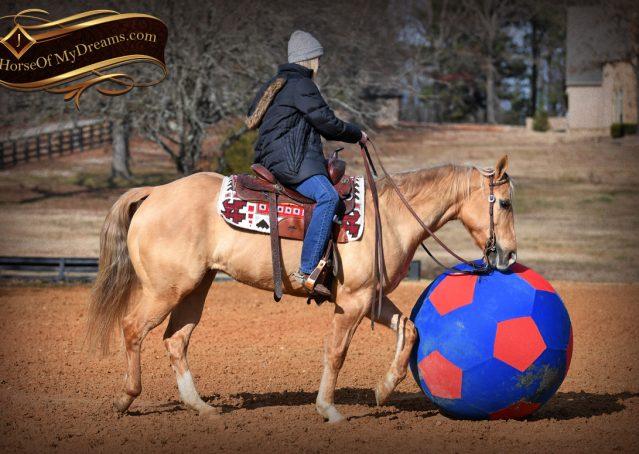 011-Sundance-AQHA-NRHA-Palomino-Quarter-Horse-Reiner-Reining-Horse-For-Sale