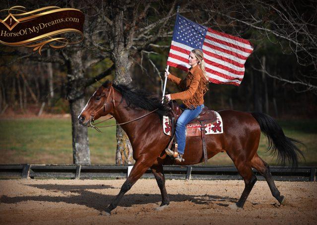 012-Harley-Bay-Quarter-Horse-Gelding-For-Sale