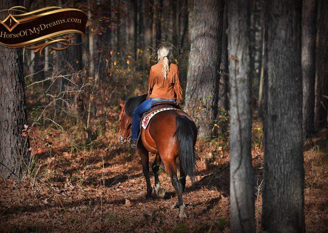 013-Harley-Bay-Quarter-Horse-Gelding-For-Sale