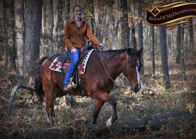 014-Harley-Bay-Quarter-Horse-Gelding-For-Sale