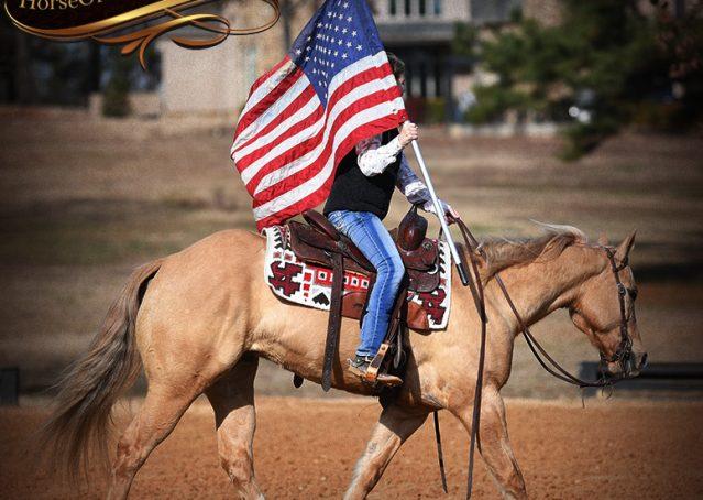 014-Sundance-AQHA-NRHA-Palomino-Quarter-Horse-Reiner-Reining-Horse-For-Sale