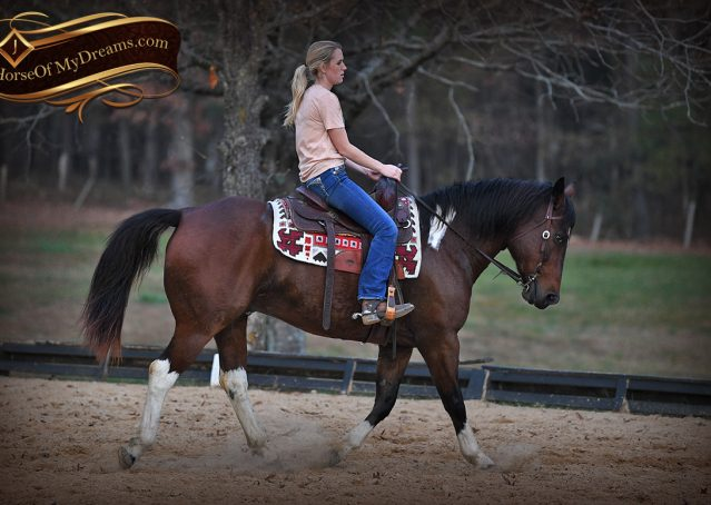 015-Carson=Bay-tobiano-gelding-for-sale