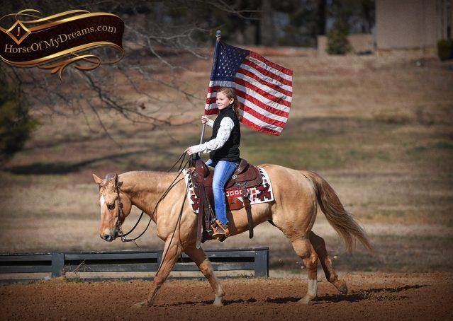 015-Sundance-AQHA-NRHA-Palomino-Quarter-Horse-Reiner-Reining-Horse-For-Sale