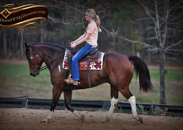 016-Carson=Bay-tobiano-gelding-for-sale